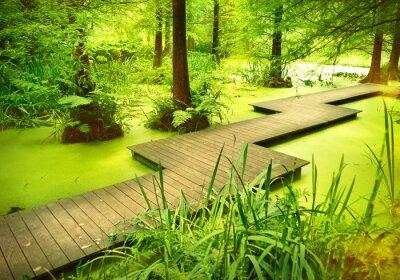 Adesivo sentiero moderno o passerella sopra uno stagno nel bosco. Vecchi alberi in piedi in una brughiera o palude nella foresta. Raggio di sole e di luce liscia cadere attraverso le cime degli alberi.