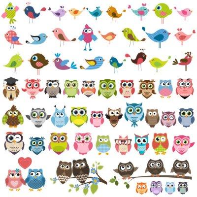 Adesivo serie di cartoni animati uccelli colorati e gufi