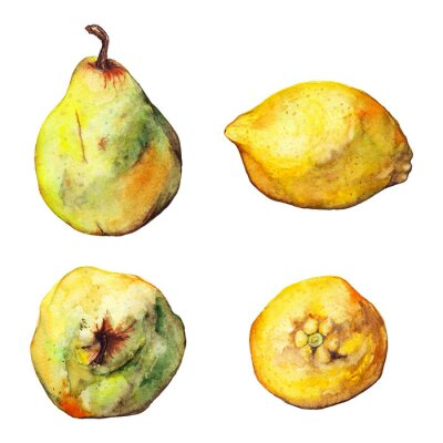 Adesivo set Acquerello limone agrumi pera frutta isolato