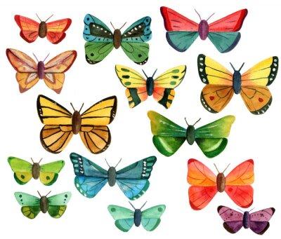 Adesivo Set di molte farfalle acquerello differenti su sfondo bianco