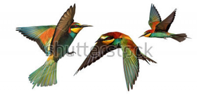 Adesivo set di uccelli di colore in volo isolato su uno sfondo bianco