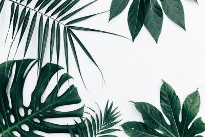 Adesivo Sfondo alla moda tropicale. Foglie su sfondo bianco