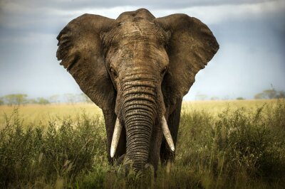 Adesivo Sfondo di elefante