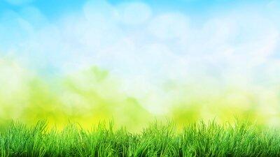 Adesivo sfondo di erba