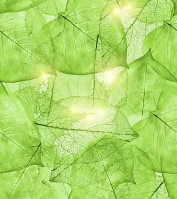 Adesivo sfondo di foglie verde scuro