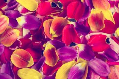 Adesivo Sfondo di tulipani petali