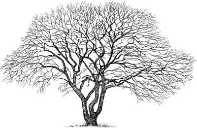 Adesivo silhouette del vecchio albero