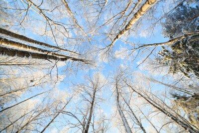 Adesivo Snow coperto albero vista prospettica guardando in alto