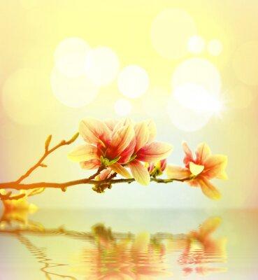 Adesivo Spring magnolia fiore sfondo