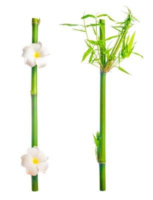 Adesivo steli di bambù con foglie e fiore del frangipani è isolato su