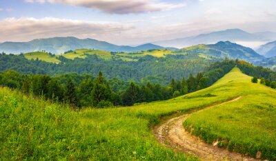 Adesivo Strada attraverso la foresta di conifere in montagna all'alba