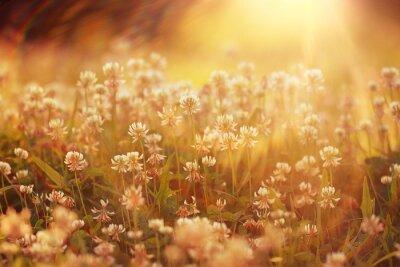 Adesivo Summer Flowers paesaggio di sfondo raggi di sole