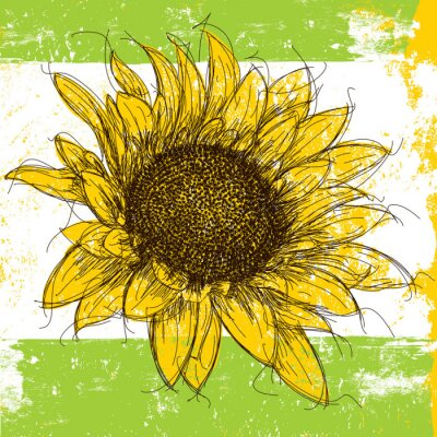 Adesivo Sunflower Sketchy