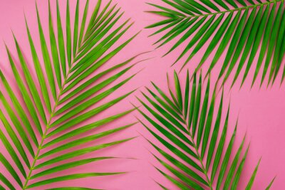 Adesivo Table top view aerial image of summer season holiday background concept.Flat lay coconut or palm green leaf on modern rustic pink paper backdrop.Free space for creative design mock up text for content