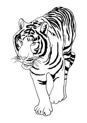 Adesivo Tigre bianca
