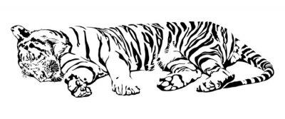 Adesivo Tigre di sonno.