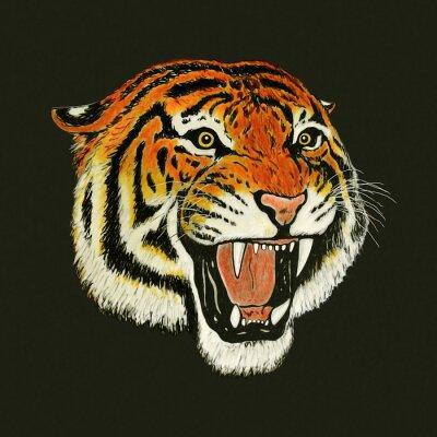 Adesivo tigre disegno ruggito