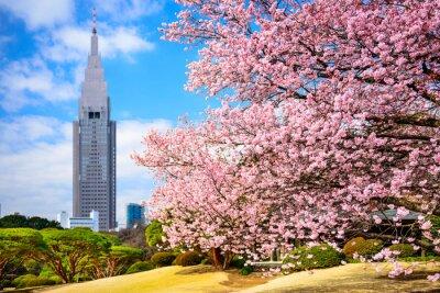 Adesivo Tokyo, Giappone Shinjuku Gyoen Park di primavera