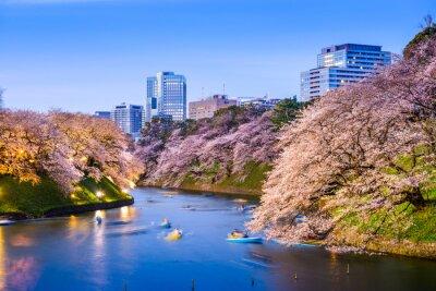 Adesivo Tokyo Imperiale fossato in primavera