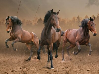 Adesivo tre cavalli
