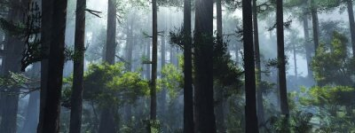Adesivo Trees in the fog. The smoke in the forest in the morning. A misty morning among the trees. 3D rendering