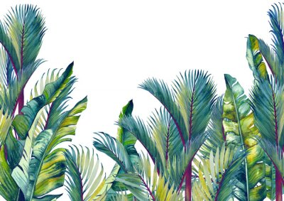 Adesivo Tropical palm trees and banana leaves. Isolated watercolor background.