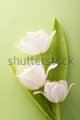 Adesivo tulipani bianchi su sfondo verde