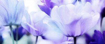 Adesivo tulipani ciano viola ultra leggero