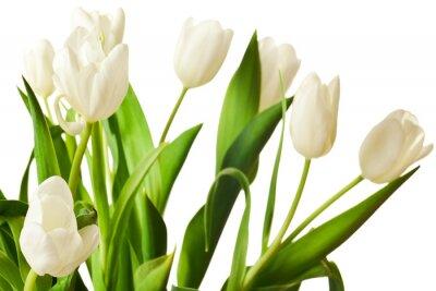 Adesivo Tulipani di primavera in bianco