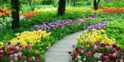 Adesivo Tulipani in fiore nel giardino