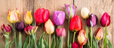 Adesivo Tulipani multicolori su uno sfondo in legno, banner, vecchie schede, fiori primaverili, tulipani sui bordi