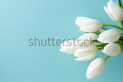Adesivo tulipano bianco