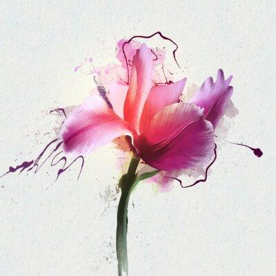 Adesivo Tulipano luminoso bello su uno sfondo bianco. Un genere di piante bulbose erbacee perenne della famiglia Lily
