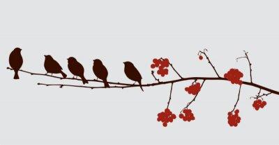 Adesivo uccelli sul ramo di sorbo