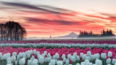 Adesivo un campo di tulipani sotto un'alba rosa con una montagna sullo sfondo