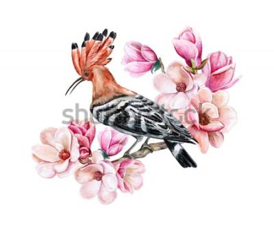 Adesivo Upupa dell'uccello che si siede su un ramo di fioritura della molla. Fiori di magnolia. Acquerello. Illustrazione. Modello. Clipart. Avvicinamento. Carta
