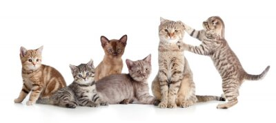 Adesivo vari gatti gruppo isolato