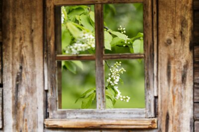 Adesivo Vecchio telaio di legno della finestra, primavera, alberi in fiore.