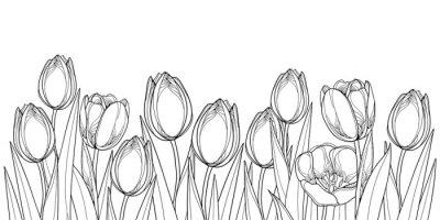 Adesivo Vector il bordo orizzontale con i fiori del tulipano del profilo, il germoglio e le foglie decorate nel nero isolato su fondo bianco. Contorni tulipani per saluto design primavera o libro da colorare.