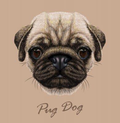 Adesivo Vector illustrativa Ritratto di Pug Dog.
