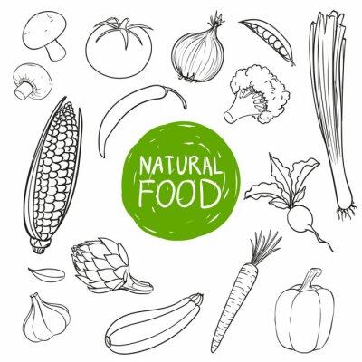Adesivo Vector Illustrazione di verdure disegnati a mano