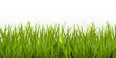 Adesivo Vector realistic seamless green grass border or frame isolated on white background - nature, ecology, environment, gardening template