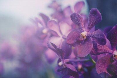 Adesivo Viola orchidea in azienda. Filtro: processo trasversale effetto vintage.