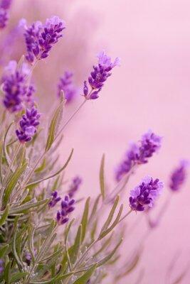Adesivo Violette Töne