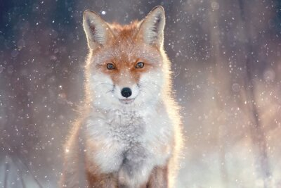 Adesivo volpe rossa nella foresta di inverno Abbastanza
