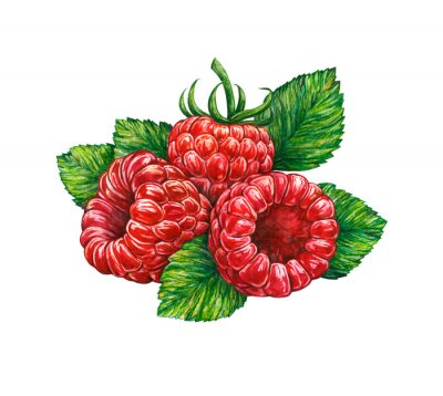 Adesivo Watercolor drawing of forest raspberry