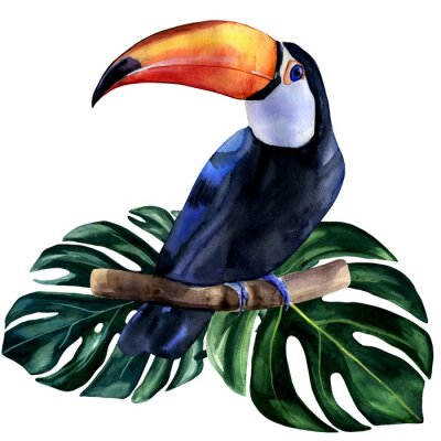 Adesivo Watercolor hand painted colorful realistic illustration of toucan bird with monstera leaves. Bright tropical composition is perfect for invitation for thematic wedding or party.