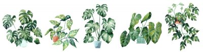 Adesivo Watercolor image with tropical leaves and leaves of indoor plants. Home plant in pots. Greenery. Juicy. Floral design element. Perfect for invitations, cards, prints, posters.