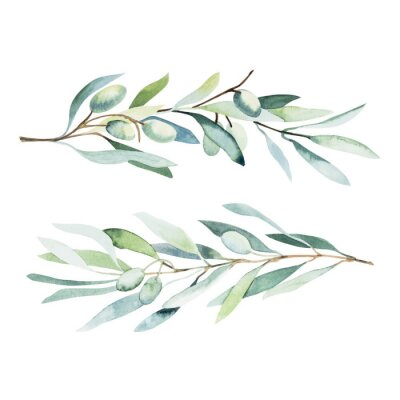 Adesivo Watercolor olive branch. Sketch of olive branch on white background