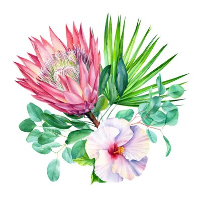 Adesivo Watercolor protea flower, isolated on white background. Botanical illustration. Hand painted watercolor.
